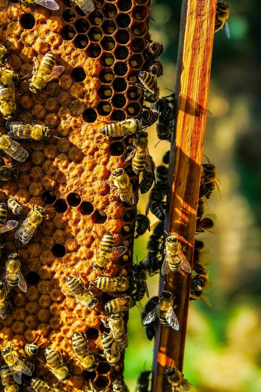 Ramka przedstawiająca czerw pszczeli i matki pszczele