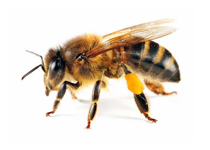 Matki pszczele Gospodarstwo Pasieczne Tomasz Strzyz